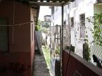 Back of La Casa de Karina; Note the Plantains Ripening